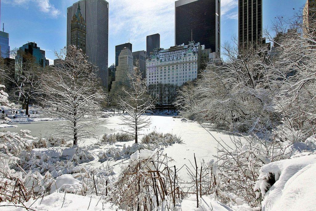 new york zima